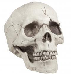 Halloween : crâne réaliste
