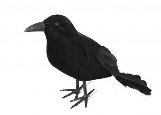 corbeau plumes Décoration