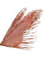 feuille de palmier sechee