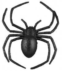 araignee noire pailletee