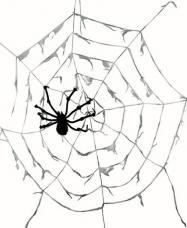 toile d araignee geante avec araignees