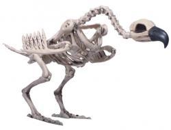Halloween : squelette de vautour