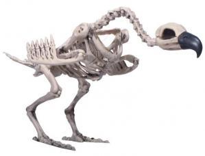 decoration squelette de vautour