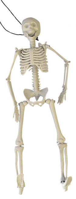 Squelette 3D articulé