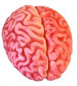 Déguisements Décoration Cervelle Plastique