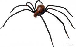 Halloween : araignée sanglante