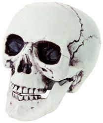 Faux crâne plastique pas cher