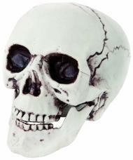 faux crâne plastique