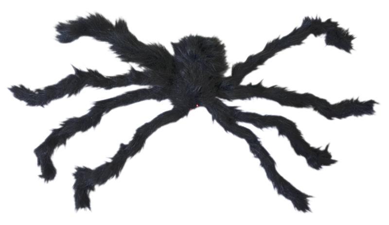 Halloween : araignée veuve noire
