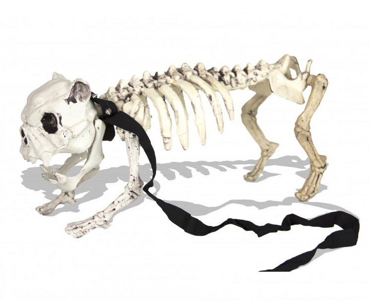 Squelette Medor pas cher